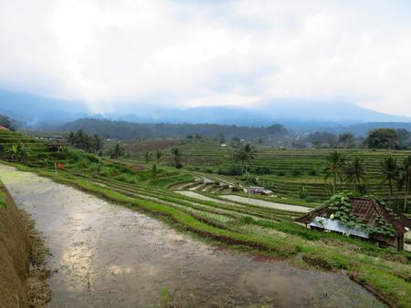 Los Arrozales De La Terraza De Arroz Verde Con Líneas Curvas Panorámicas Ven Reflexión De Agua Y Kioscos Locales