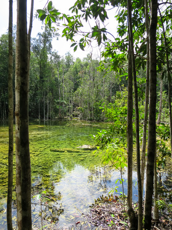 jade plant: Shades of green colors scene of hot spring pond surrounded by trees with clear water reflection and tree trunk foreground in Krabi
