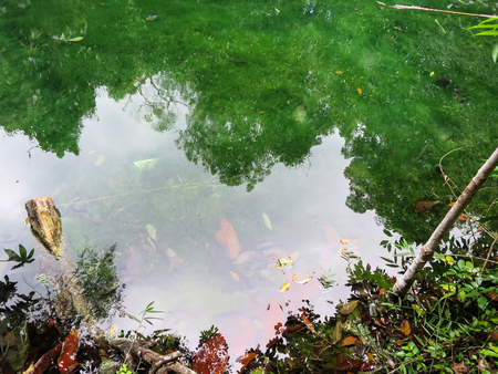 jade plant: Shades of green colors scene of hot spring pond with clear water reflection and shadow in Krabi