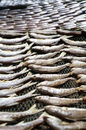 fish tail: Drying white ocean fish on fishnet rack under strong sunlight, Chonburi, Thailand