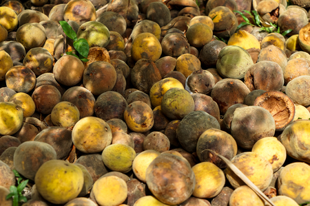 Pile of rotten and ripe rounded santol or cottenfruit in house garden under tree shades