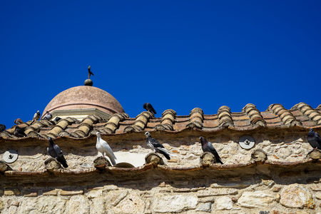 Classic scene of pigeons in white, black and grey color on terracotta roof tile of old classic little church in earth tone natural stone wall with clear blue sky background, Athens, Greece