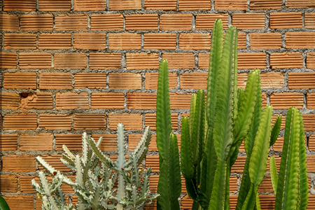 Summer scene of rough orange brick wall and mortar background with fresh green cactus desert plant, Thailand Stock Photo