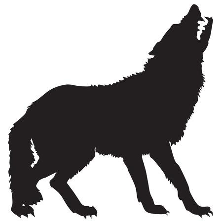 тундра: силуэт волка