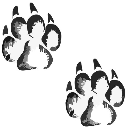 huellas de perro: Huellas de un gran perro o un gato Foto de archivo