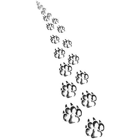big dog: Footprints of a big dog or cat