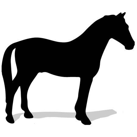 Graceful black stallion against white