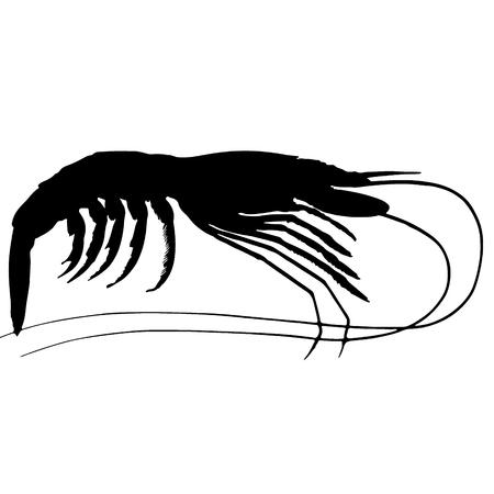 shrimp silhouette