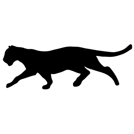 Black panther creeps up to victim on a white background