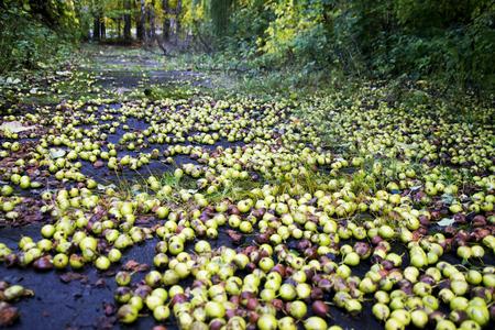 梨やリンゴの巨大な作物。地面に果物と秋の風景