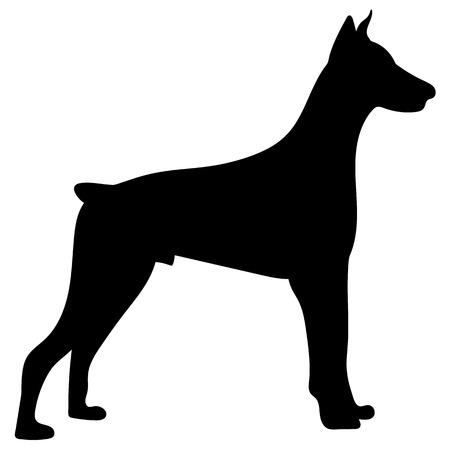 犬のシルエット。ドーベルマン・ pinscher のベクターイラスト。  イラスト・ベクター素材