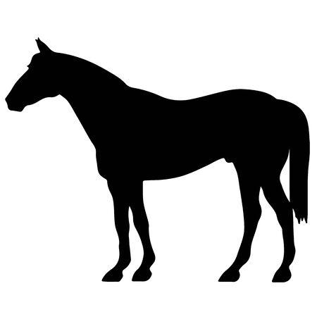 馬罰金ベクトル シルエットと概要 - 優雅な黒種牡馬を飼育 写真素材