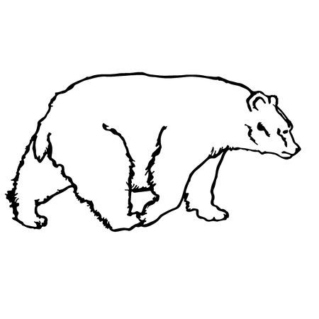 黒と白のベクトルクマのシルエット