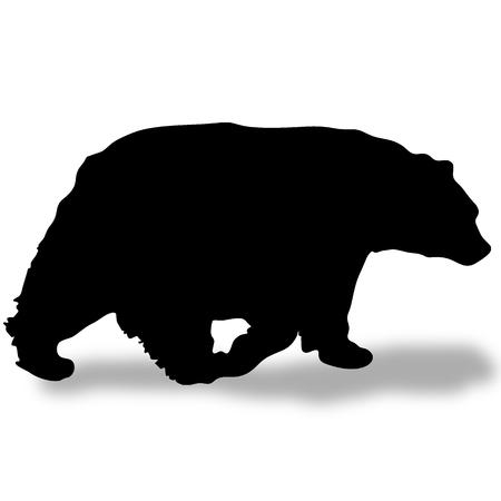影のある黒いクマのシルエット 写真素材