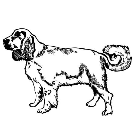 vettore della siluetta del retriver del labrador