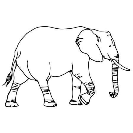 黒と白のベクトルの象のシルエット 写真素材