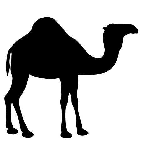 Black and white vector silhouette of a camel Illustration