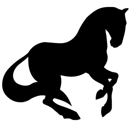 Rearing up horse fine vector silhouette and outline, graceful black stallions.
