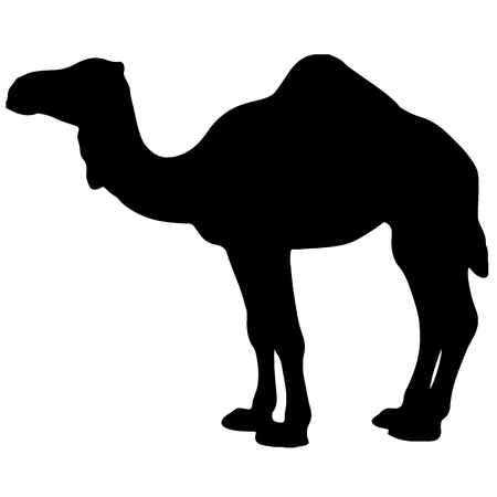 black and white vector silhouette of a camel Ilustrace