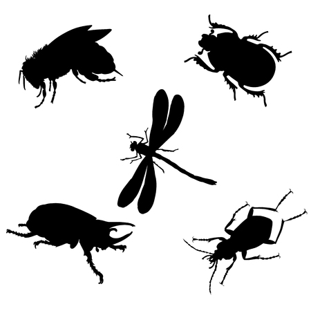 set of black vector illustration of insects