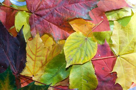Multicolor leafs