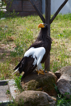 Eagle is sitting on the tree