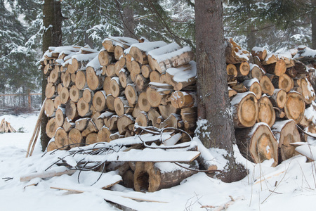 batch: Batch of logs in a forest