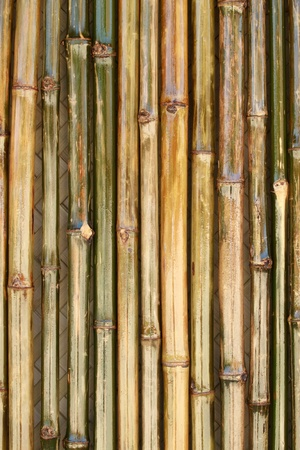 Shiny bamboo wall with the texture of bamboo hut in the background photo