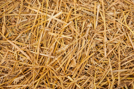 Golden yellow hay straw as textured background