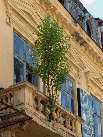 Bucharest, Romania - 11.07.2015 - A tree grows in a crack in the balcony of a neglected building in the old town center Editorial