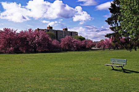 connecticut: A deserted bench at Mill River Park - Stamford, Connecticut