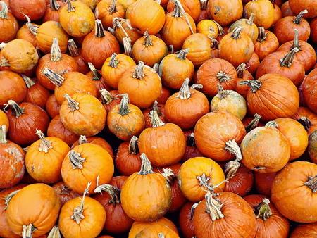 mini farm: A variety of pumpkins at an open-air farmers market Stock Photo