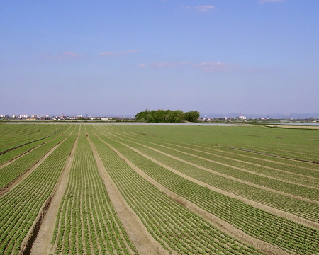 Agricultural landscape setting in the southwest of Germany