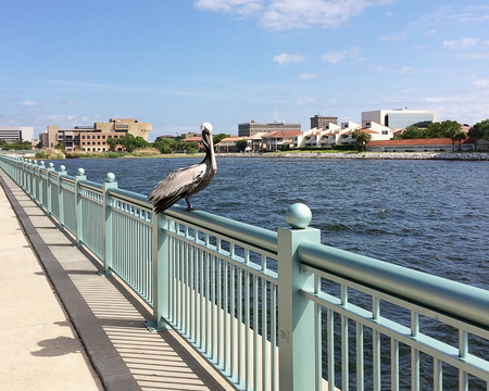 A pelican resting on a rail overlooking Pensacola Bay and downtown district Standard-Bild - 115064612