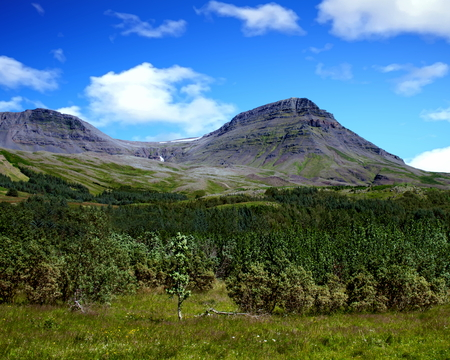 Woodland and the Esja Mountain range, Iceland Standard-Bild - 115064693