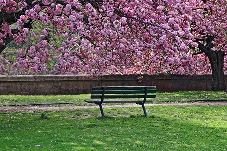 A deserted bench at Mill River Park - Stamford, Connecticut