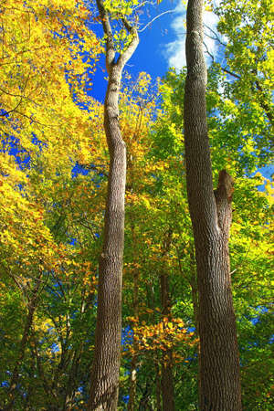 Northern hardwood forest in autumn, rural New York, USA 免版税图像