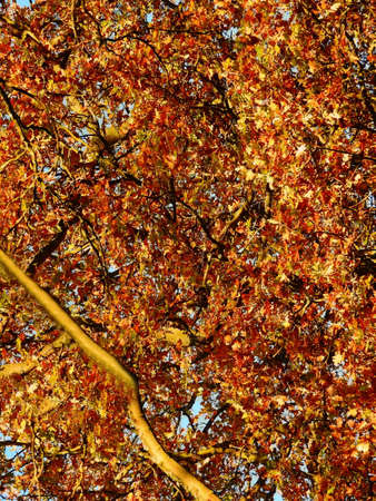 Closeup view of autumn leaves, Franconia, Germany