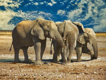 Group of elephants at the Etosha National Park, Namibia