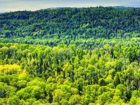 Forested landscape in Pigeon River Provincial Park, Ontario, Canada 免版税图像