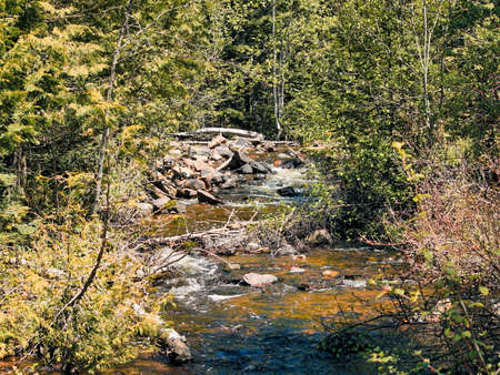 Running stream and trees at Sleeping Giant Provincial Park, Ontario, Canada