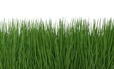 Green grass isolated on white background 3d render
