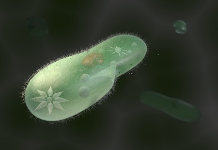 unicellular: model biological micro organism paramecium caudatum 3d render Stock Photo