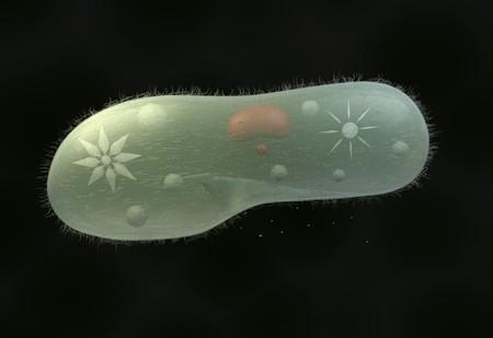 protozoan: model biological micro organism paramecium caudatum 3d render Stock Photo
