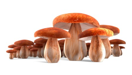 cep: Four ceps isolated on white background 3d render