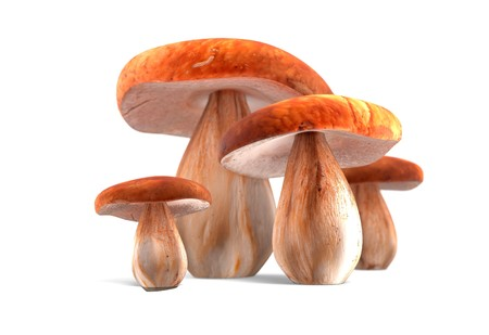 cep: ceps isolated on white background 3d render