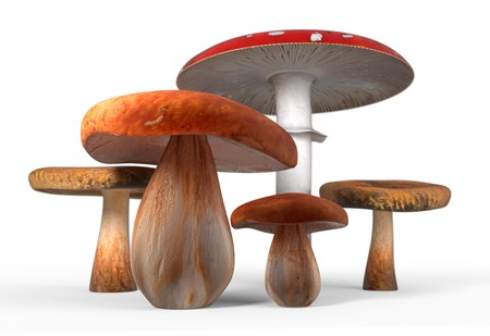cep: Group of mushrooms isolated on white background 3d render Stock Photo