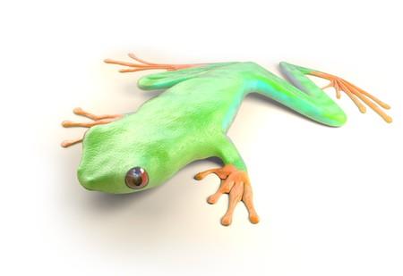 rode eyed boomkikker uit tropische regenwoud van Costa Rica op wit wordt geïsoleerd. Mooi groen en blauw treefrog is een exotisch dier uit het regenwoud. 3d render