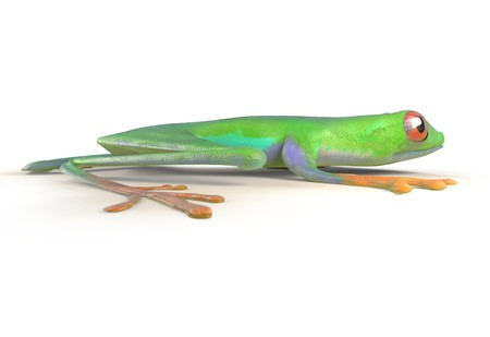 terrarium: red eyed tree frog from tropical rainforest of Costa Rica isolated on white. Beautiful green and blue treefrog is an exotic animal from the rain forest. 3d render