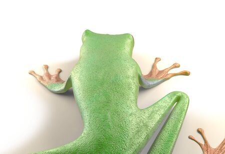 red eyed tree frog from tropical rainforest of Costa Rica isolated on white. Beautiful green and blue treefrog is an exotic animal from the rain forest. 3d render